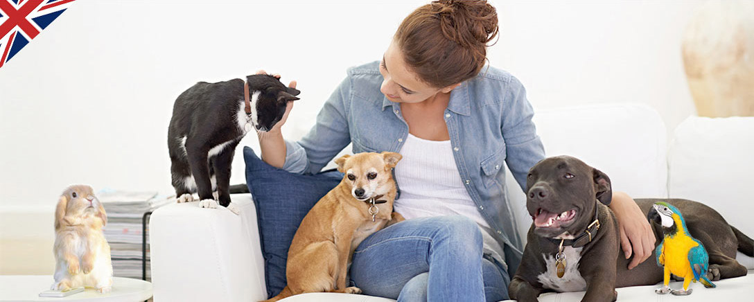 Level 2 Pet Sitting & Dog Walking Diploma
