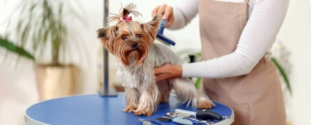 Pet Grooming Advanced