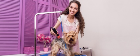 Dog-Grooming Professional Diploma